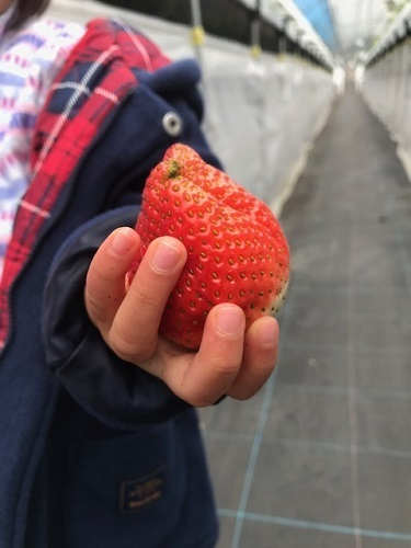 大きなイチゴ.jpg