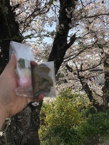 桜と餅.jpg