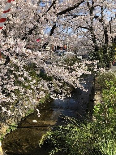 桜川.jpg